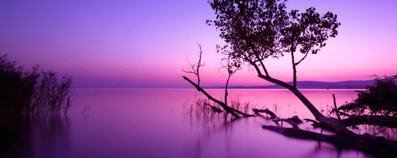 Purple Afternoon